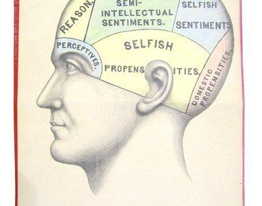 The Brain by Laurie Mirkin