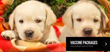 Puppy Vaccines Sarasota Bradenton Florida