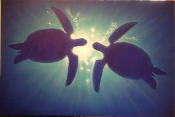 underwater view of marine life