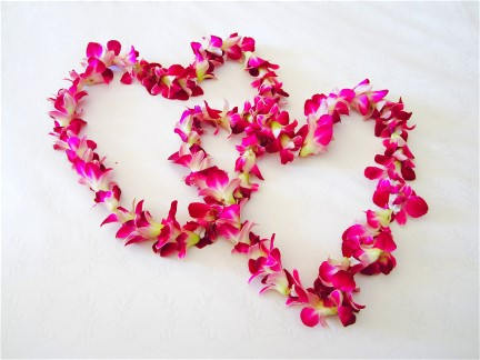 Love Is In The Air in Sarasota Bradenton