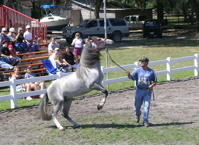 Stallions2
