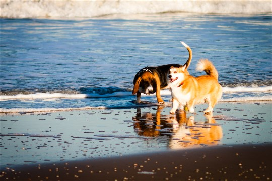 Gracie and Astro at the Beach