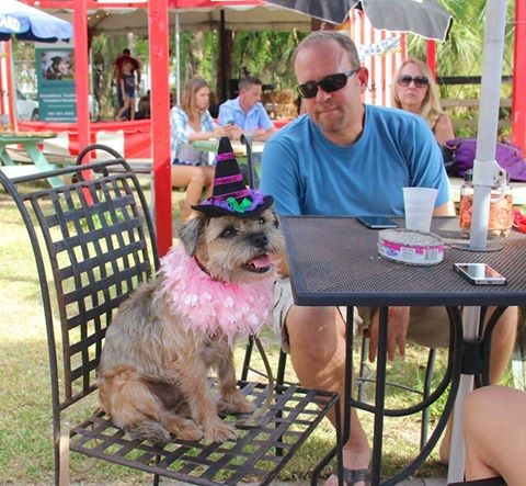 Halloween Party For People And Dogs in Sarasota Florida
