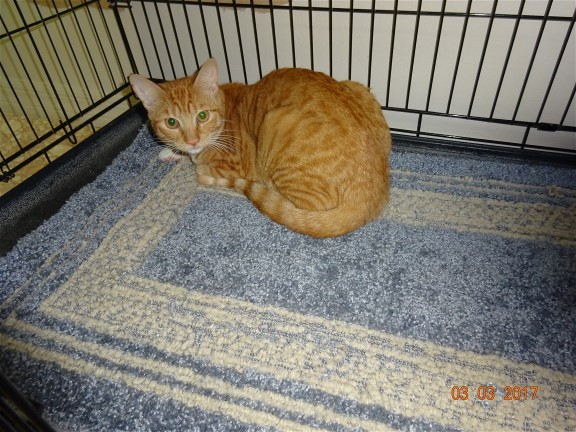 Pet Adoption Sarasota County