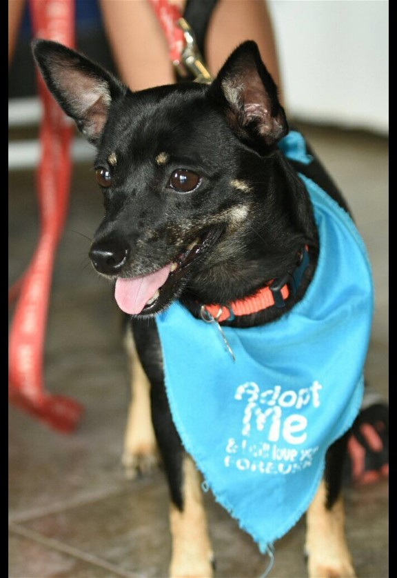Pet Adoption Manatee County