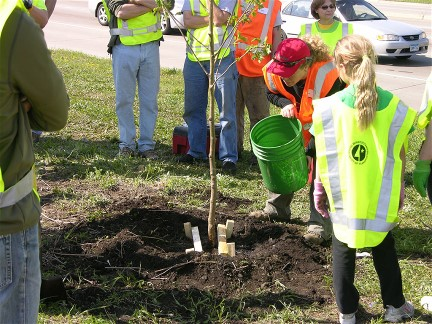 In North Port, a decades-old grassroots effort to protect and maintain the area's tree canopy has proven successful.
