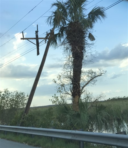 Damage to electrical grid in Florida
