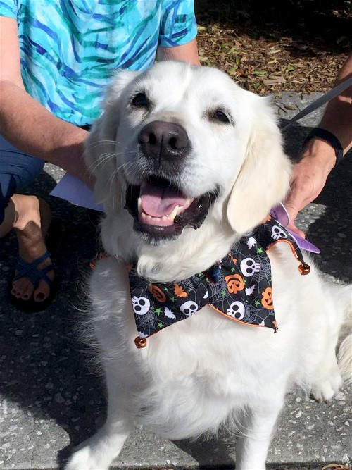 Howl'ween is always a popular event at the Bradenton Farmers' Market