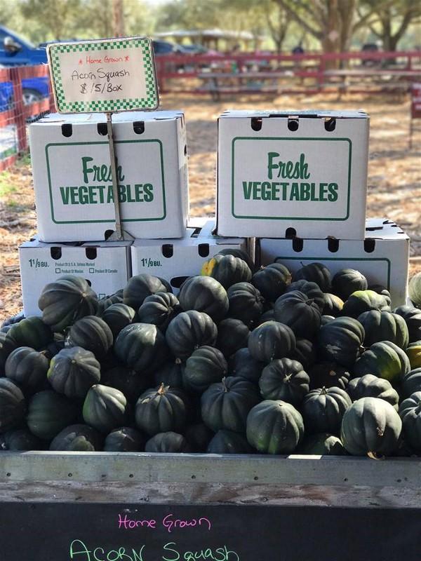 Fresh vegetables at Hunsader Farms
