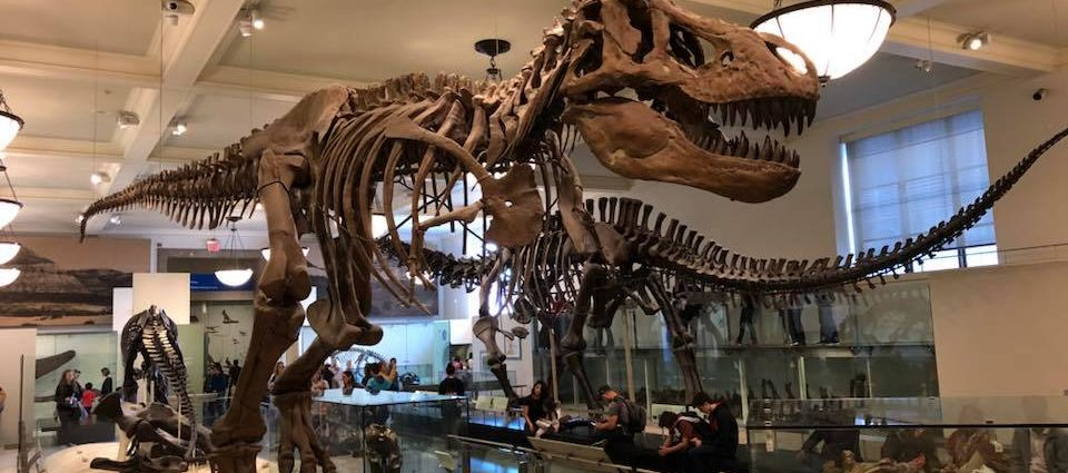 A Day at the Museum of Natural History, New York City!