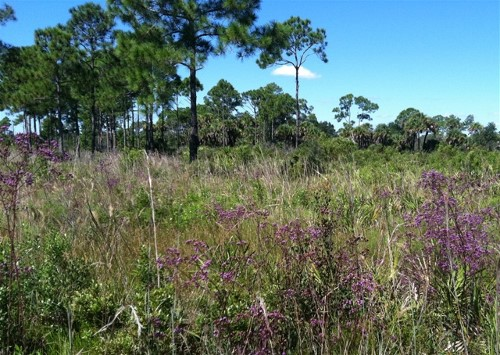 """If you're looking for a true """"bond with nature"""" experience you must pack your brood and head to this hidden gem located in the North Port Estates"""
