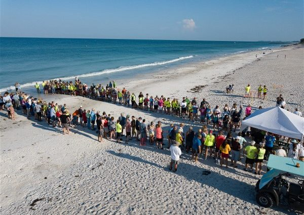 Turtle Release at Coquina Gulfside Park, Bradenton Beach, Florida
