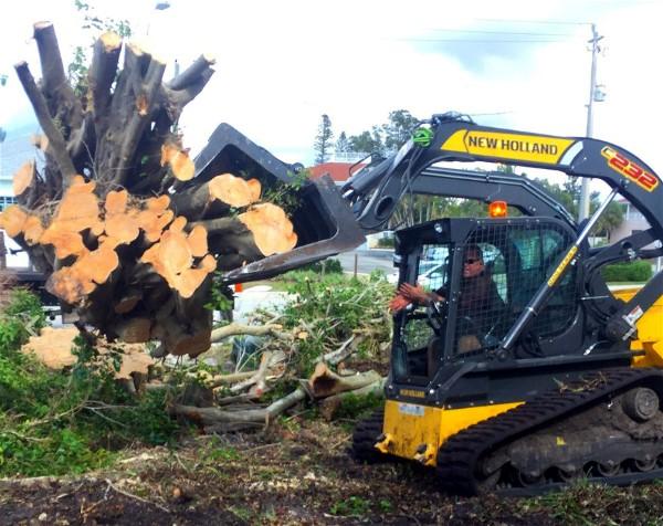 RootsSRQ tree removal