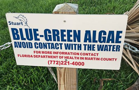 The Slow Death of Lake Okeechobee And the Rise of Toxic Blue-Green Algae In Florida -Part 2 of A Series by Rose Lipke