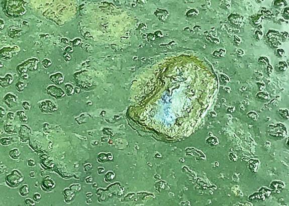 Toxic blue-green algae in Florida!
