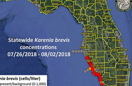 What Is Going On With Red Tide On Florida's Coast? - Part 3 From Rose Lipke