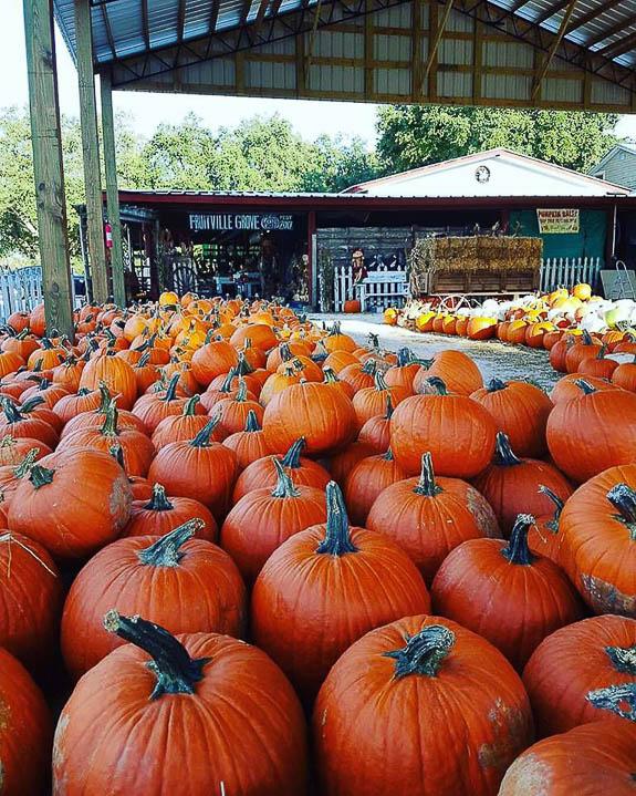 Fruitville Grove Pumpkin Festival is coming up.
