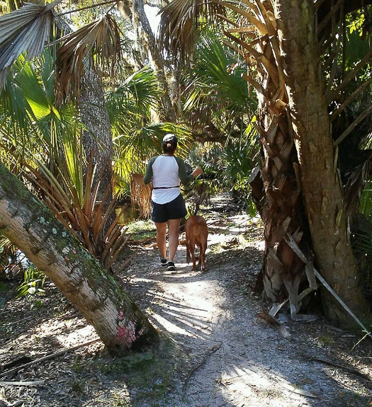 """Dogs allowed on leash"" at Carlton Reserve in Sarasota County, FL"