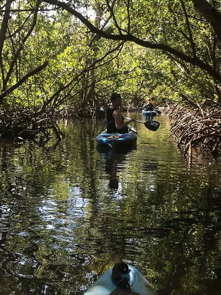 Liquid Blue Outfitters at Lido Key Mangrove Tunnels has high quality kayaks.