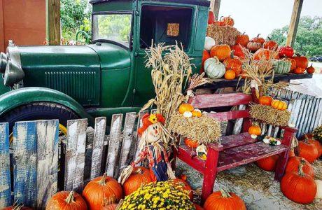 It Must Be Fall In Sarasota - Fruitville Grove Is Having It's Annual Pumpkin Fest!