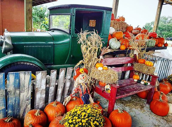 It Must Be Fall In Sarasota - Fruitville Grove Is Having It's Annual Pumpkin Fest!