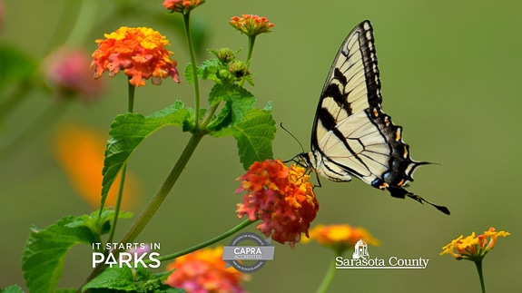 Butterfly Identification Walk at Curry Creek Preserve East in Venice, FL