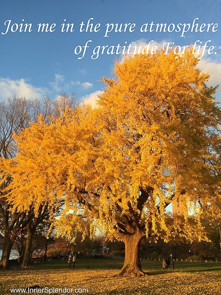 Seven days of gratitude in preparation for Thanksgiving Day.