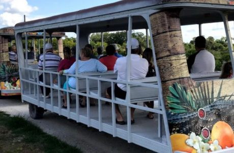 Ride Mixon Farms Orange Blossom Express in Bradenton, FL