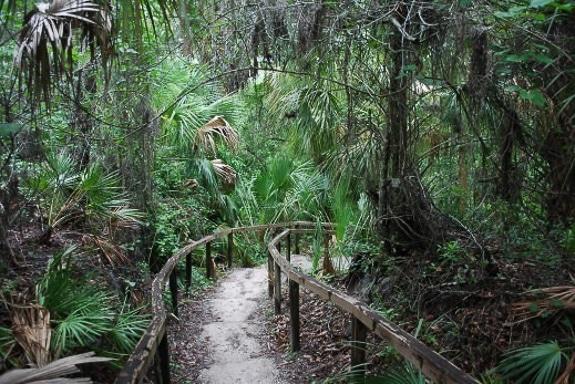 Rye Preserve  in Palmetto, FL