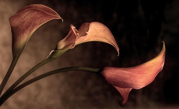 "Richard Speedy ""Three Callas"""