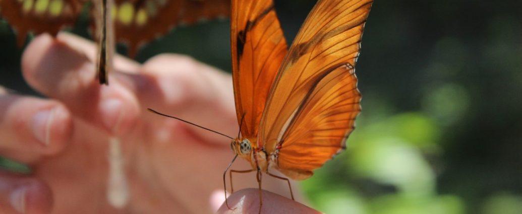 Butterfly at Sarasota Jungle Gardens