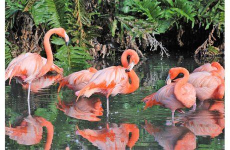 jungle gardents flamingos