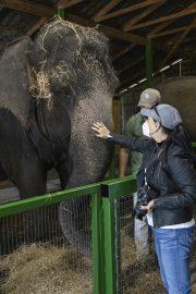 Myakka Elephant Ranch 3