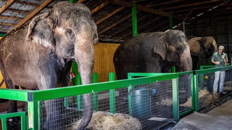 Myakka Elephant Ranch
